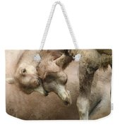 Baby Camels Weekender Tote Bag