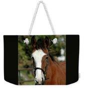Baby Draft Horse Weekender Tote Bag