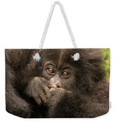 Baby Gorilla Close-up Hiding Mouth With Hands Weekender Tote Bag