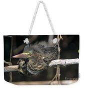 Baby Green Heron Resting On A Branch Weekender Tote Bag
