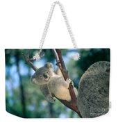 Baby Koala Bear Weekender Tote Bag