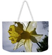 Backlit Daffodil Weekender Tote Bag