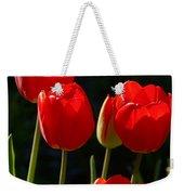Backlit Red Tulips Weekender Tote Bag