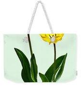 Backlit Yellow Tulips Weekender Tote Bag