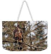 Bald Eagle Juvenile 2 Weekender Tote Bag