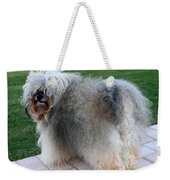 ball of fur Havanese dog Weekender Tote Bag