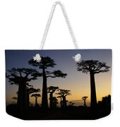 Baobab Forest At Sunset Weekender Tote Bag