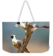 Bare-faced Go-away-birds Corythaixoides Weekender Tote Bag