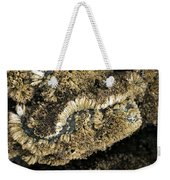 Barnacles At Low Tide Weekender Tote Bag