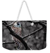 Barred Owl Hungry  Weekender Tote Bag