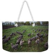 Barred Plymouth Rock Chickens Free Weekender Tote Bag