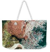 Barrell Sponges And Sea Fans Weekender Tote Bag
