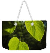 Basswood Leaves Against Dark Forest Background Weekender Tote Bag