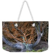 Battered Cypress With Orange Alga Weekender Tote Bag