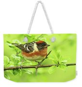 Bay-breasted Warbler Weekender Tote Bag