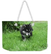 Beautiful Alusky Puppy Dog Walking Through Thick Green Grass Weekender Tote Bag