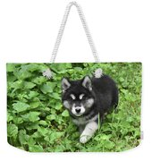 Beautiful Alusky Puppy Peaking Out Of Green Foliage Weekender Tote Bag