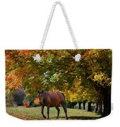 Beautiful Bay Horse In Fall Weekender Tote Bag