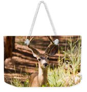 Beautiful Buck Deer In The Pike National Forest Weekender Tote Bag