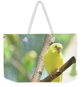 Beautiful Close Up Of A Budgie Parakeet Weekender Tote Bag