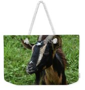 Beautiful Face Of A Billy Goat With Tan And Black Silky Fur Weekender Tote Bag