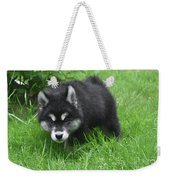 Beautiful Face Of A Black And White Alusky Puppy Weekender Tote Bag