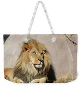 Beautiful Face Of A Lion In The Warm Sunshine Weekender Tote Bag