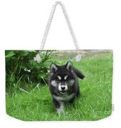 Beautiful Face Of An Alusky Puppy Dog In Thick Green Grass Weekender Tote Bag
