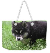 Beautiful Furry Black And White Alusky Only Two Months Old  Weekender Tote Bag