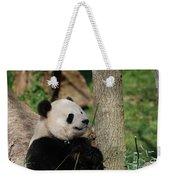 Beautiful Giant Panda Bear In The Wild Weekender Tote Bag