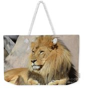 Beautiful Golden African Lion Relaxing In The Sunshine Weekender Tote Bag