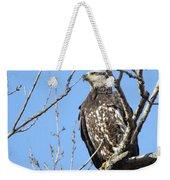 Beautiful Juvenile Eagle Weekender Tote Bag