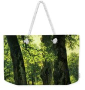 Beautiful Oak Trees Reach To The Skies Weekender Tote Bag