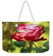 Beautiful Pink Rose Blooming In Garden Weekender Tote Bag