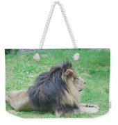 Beautiful Profile Of A Resting Lion In Green Grass Weekender Tote Bag