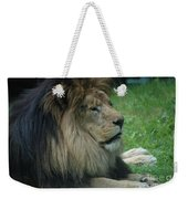 Beautiful Resting Lion In Tall Green Grass Weekender Tote Bag