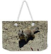 Beautiful Squirrel Standing In A Sandy Area In California Weekender Tote Bag