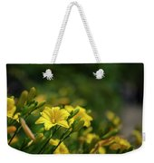 Beautiful Vibrant Yellow Lily Flower In Summer Sun Weekender Tote Bag
