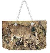 Beautiful Young Deer Weekender Tote Bag