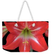 Beauty Of The Amaryllis Weekender Tote Bag