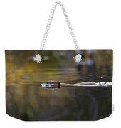 Beaver Swimming  Late Evening Weekender Tote Bag