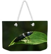Beetle At Sunrise Weekender Tote Bag