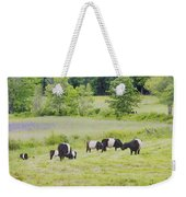 Belted Galloway Cows Rockport Maine Poster Prints Weekender Tote Bag