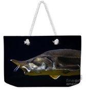 Beluga Sturgeon No 1 Weekender Tote Bag