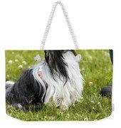 Biewer Yorkshire Terrier Is Looking Up At His Master Weekender Tote Bag