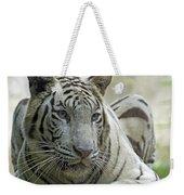 Big Cats 117 Weekender Tote Bag