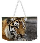 Big Cats 78 Weekender Tote Bag