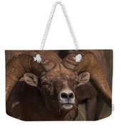 Big Horn Grazing Weekender Tote Bag