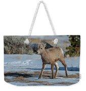 Bighorn Lamb 2 Weekender Tote Bag