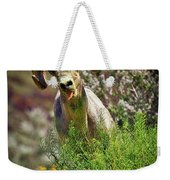 Bighorn Sheep And Wildflowers In Anza Borrego Desert State Park Weekender Tote Bag by Sam Antonio Photography